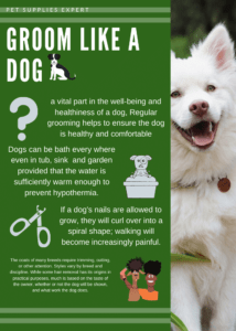 Green Dog with Shades Pet Fundraising
