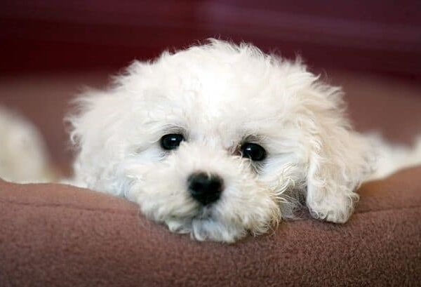 Ten Cutest and Budget Friendly Dog Breeds