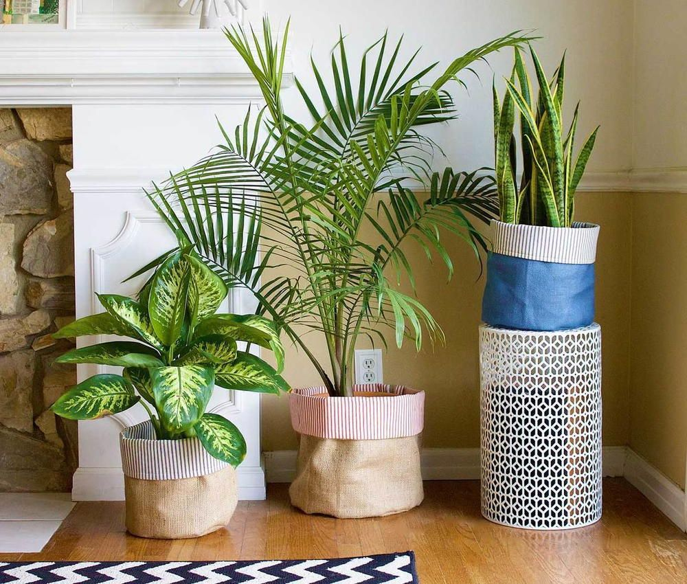 Planters To Make Your Home Feel Lively