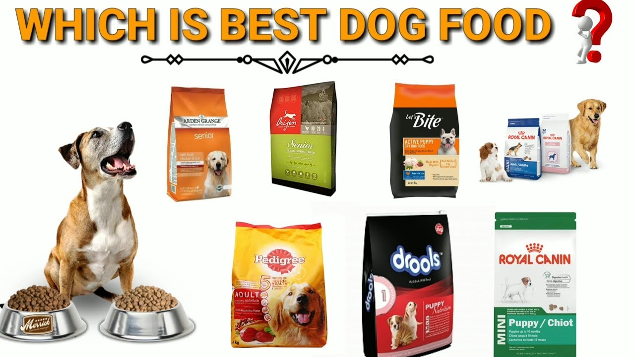 The benefits of using music to give the best food for dogs