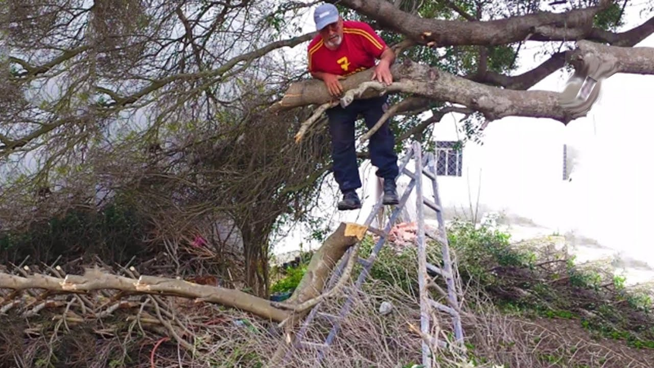 Selecting the Right Tree Surgeon