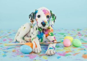 Are You Ready To Buy Your Family Dog At Cheap Rate—Dalmatian Puppy's Here